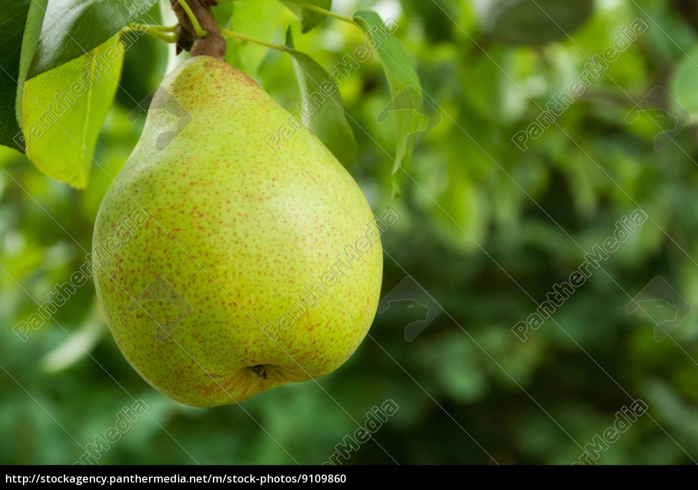 blatt, baumblatt, baum, baeume, gruen, gruenes - 9109860