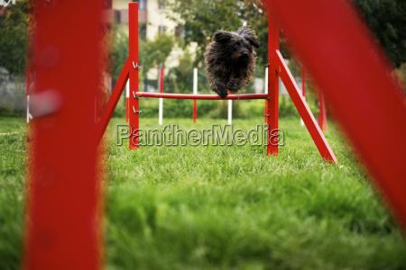tier tiere hund springen springend springt