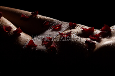 the rose petals