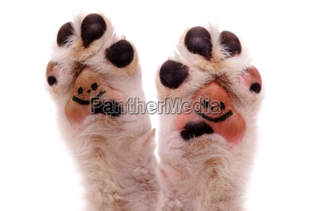 two laughing dog paws
