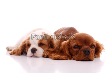 two dreaming puppies