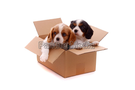 two sad puppies in cardboard box