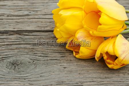 tulpen - 9164996