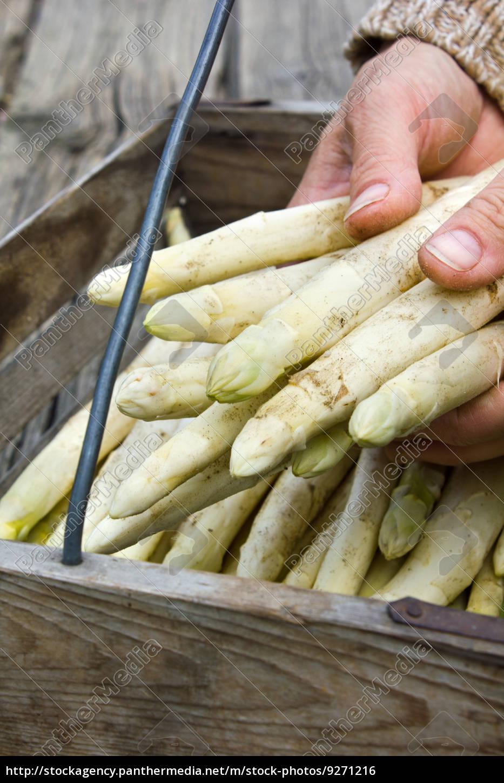 asparagus - 9271216