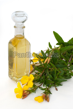 wieczor primrose olej z kwiatami