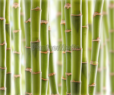 bambusdschungel