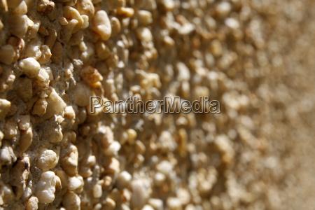 stein braun braeunlich bruenett mauer braune