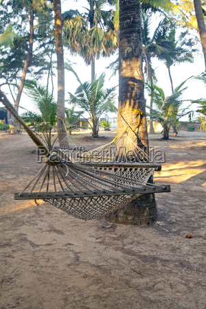 garden with palm trees and hammocks