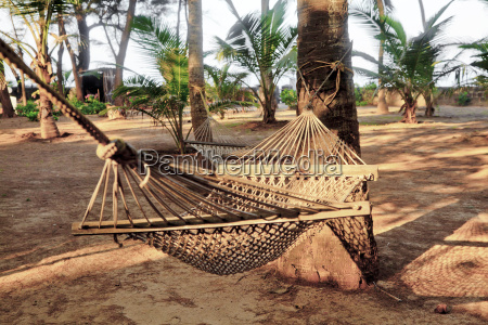 tropical garden landscape hammocks coconut tree