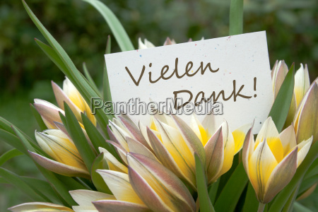 tulips yellow thank you thank text