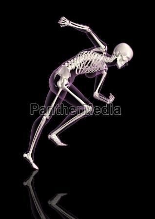 medizinisches weibliches skelett in laufender haltung