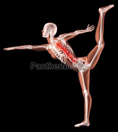 weibliches skelett in yoga position