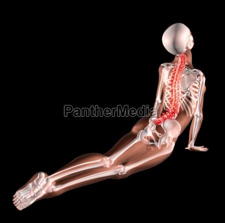 weibliches skelett zurueckreicht