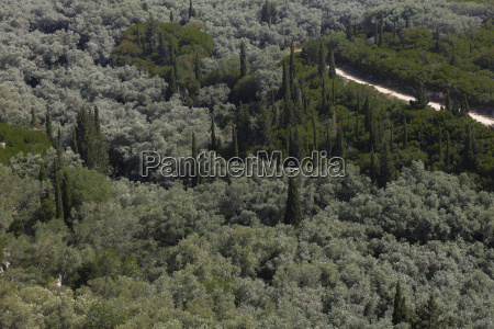 typische vegetation auf der insel korfu