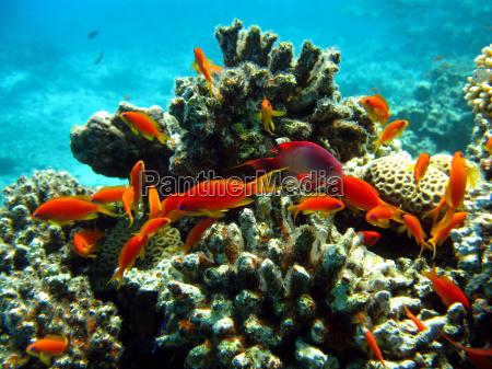 fisch unterwasser tropische tropisch kunstspringen tauchend