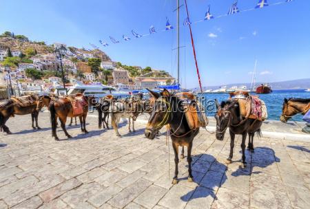 donkeys auf der griechischen insel