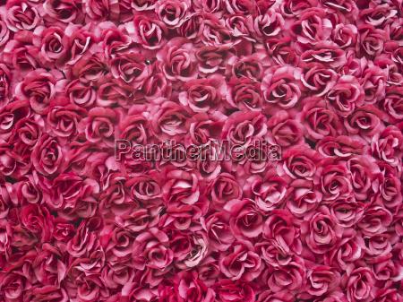 hintergrund roter rosen