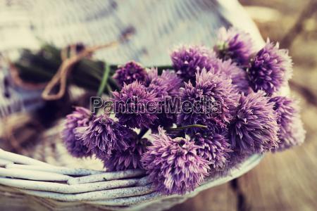fresh chives flower