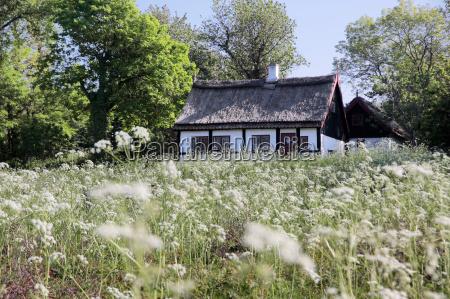 reetdachhaus mit fruehlingswiese