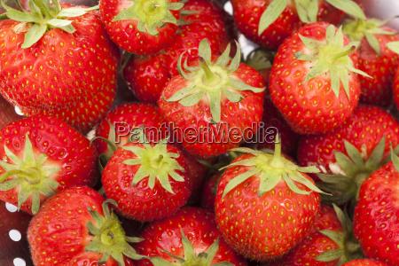 gewaschene erdbeeren