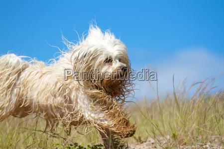 froehlicher nasser hund