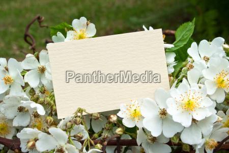praesentieren tafel blume pflanze rose holz