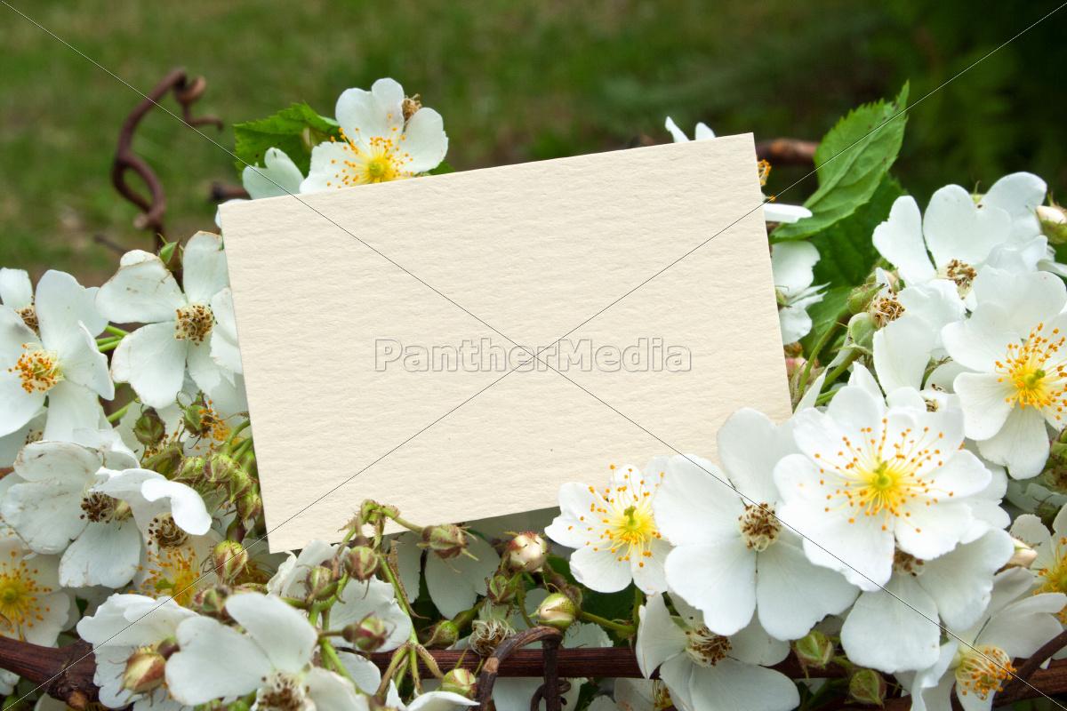 praesentieren, tafel, blume, pflanze, rose, holz - 9569384