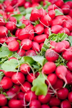 closeup fresh red radish macro