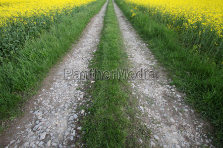 way through fields of rape