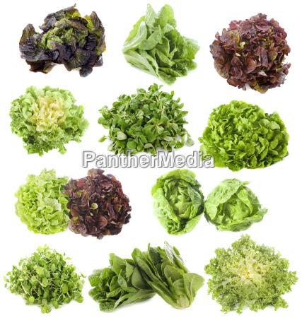 sorten von salaten