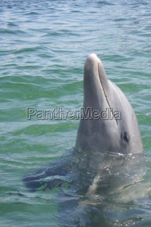 dolphin pinball sea animal salt water
