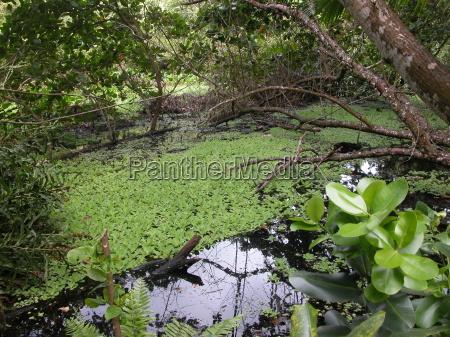 pflanzen auf den seychelles seychellen