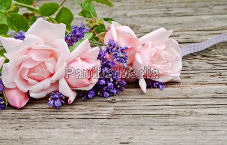 rosa, rosen - 9679418