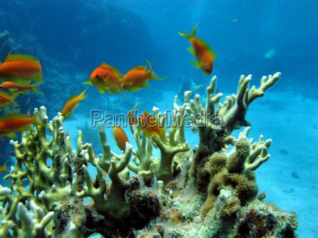 korallenriff mit feuerkoralle und exotische fische