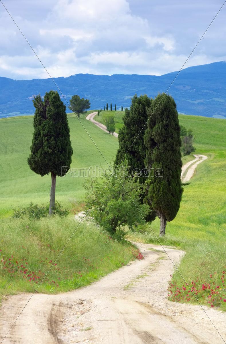 Toskana Zypressen mit Weg - Tuscany cypress trees with - Stockfoto ...