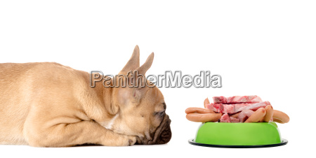 dog with pet fully butchery