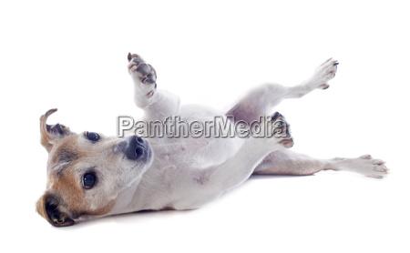 klang schall haustier kuscheltier hund heulen