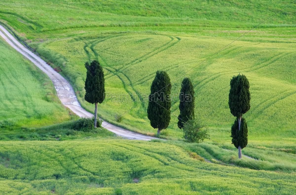 Toskana Zypressen mit Weg - Tuscany cypress trees with - Stock Photo ...