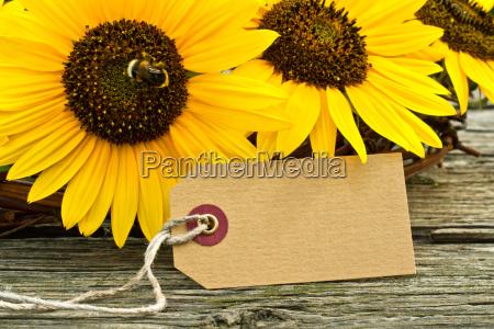 summer sunflower label card paper gift