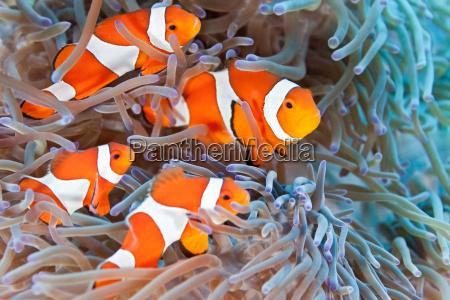 fisch unterwasser wildlife anemone windroeschen unterwasser