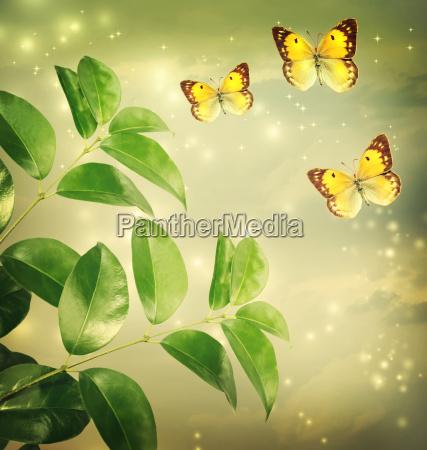 butterflies on green star lights background