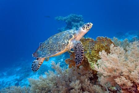 tier wild fisch unterwasser wildlife wasserschildkroete