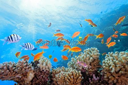 fisch reflexion unterwasser reflektion spiegelbild wildlife