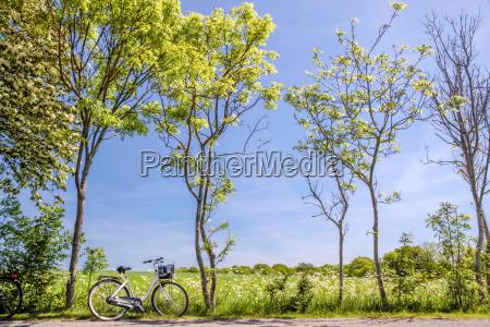 fruehlingsbaeume mit fahrrad