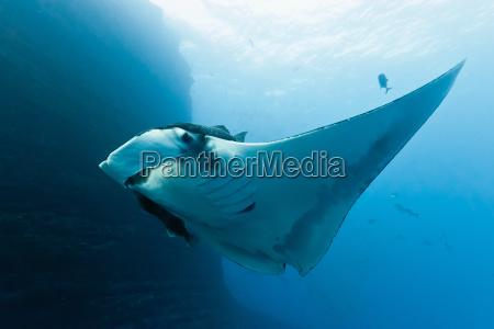 tier fisch unterwasser lichtstrahl wildlife strahl