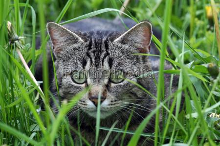 eine katze kurz vor dem angriff