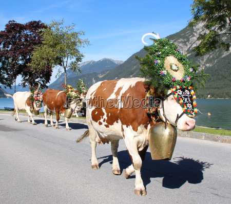 mountains austrians austria cows salt water