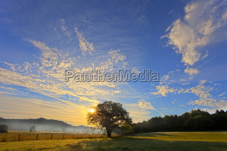 sunrise above meadow with oak