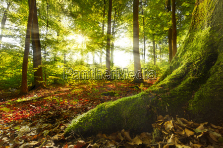 morning light shining into forest