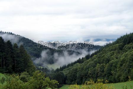 nebel am morgen im schwarzwald